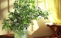 Dekoration mir Pflanzen